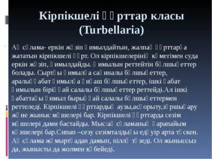 Кірпікшелі құрттар класы (Turbellaria) Ақ сұлама- еркін жүзіп қимылдайтын, жа