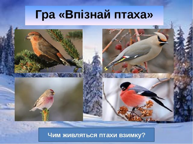 Гра «Впізнай птаха» Чим живляться птахи взимку?