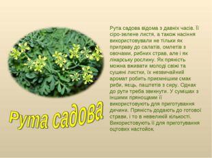 Рута садова відома з давніх часів. Її сіро-зелене листя, а також насіння вико