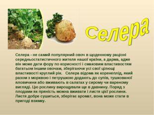 Селера - не самий популярний овоч в щоденному раціоні середньостатистичного ж