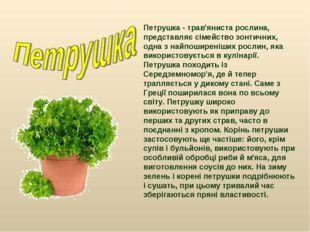 Петрушка - трав'яниста рослина, представляє сімейство зонтичних, одна з найпо
