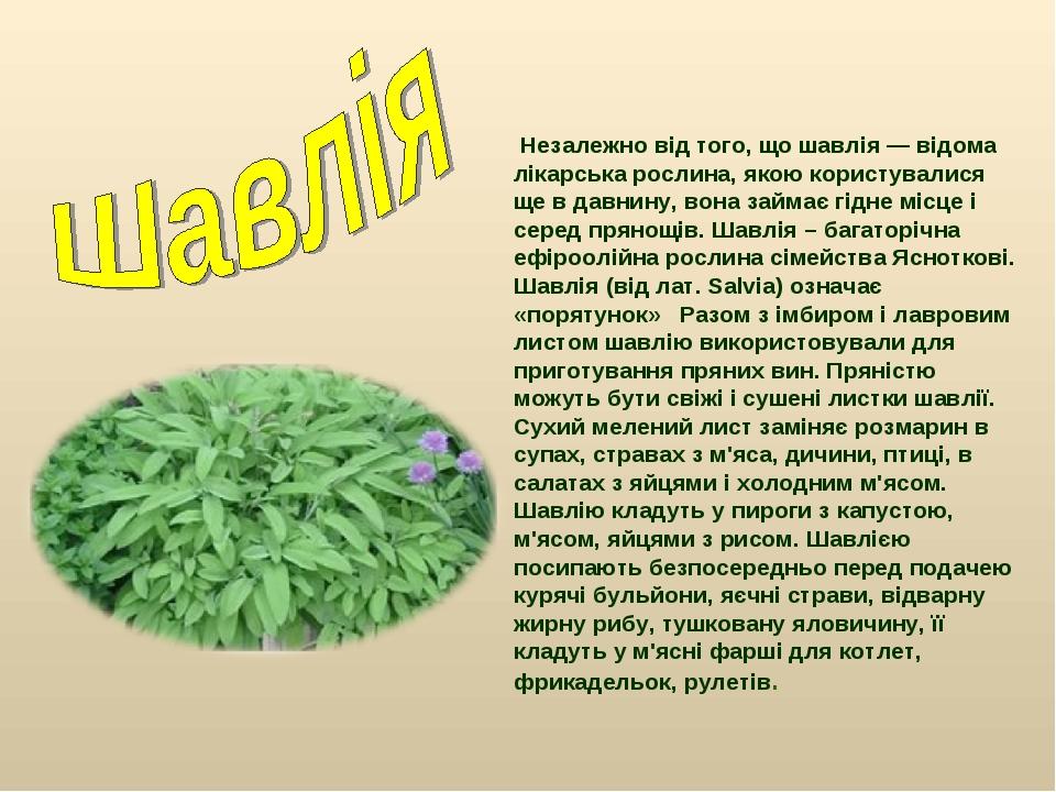 Незалежно від того, що шавлія — відома лікарська рослина, якою користувалися...