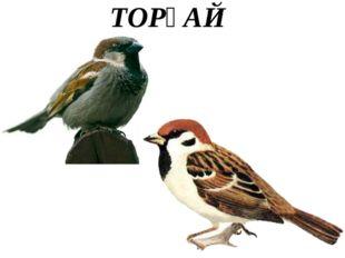 ТОРҒАЙ