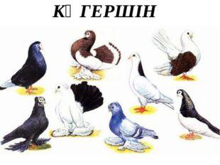 КӨГЕРШІН