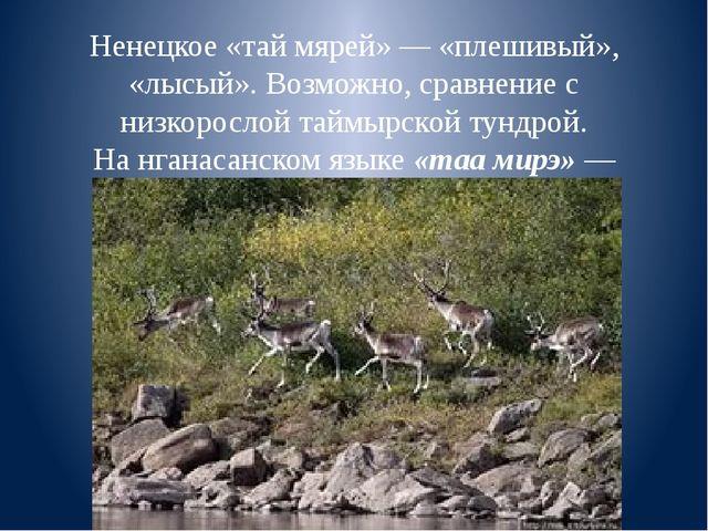Ненецкое «тай мярей»— «плешивый», «лысый». Возможно, сравнение с низкорослой...