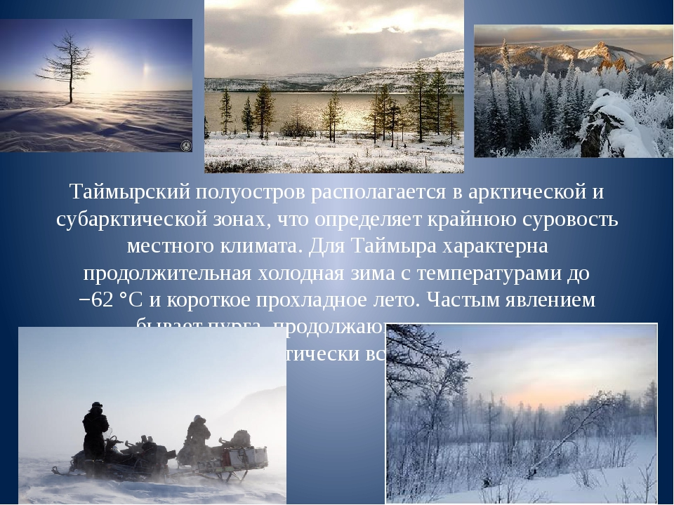 Таймырский полуостров располагается в арктической и субарктической зонах, что...