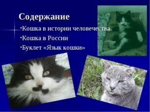 Содержание Кошка в истории человечества Кошка в России Буклет «Язык кошки»
