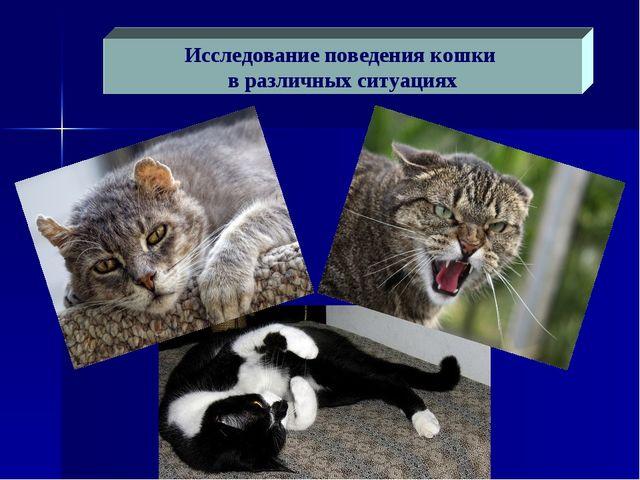 Исследование поведения кошки в различных ситуациях