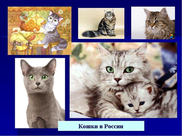 Кошки в России