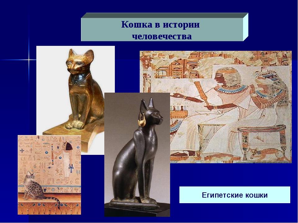 Египетские кошки Кошка в истории человечества