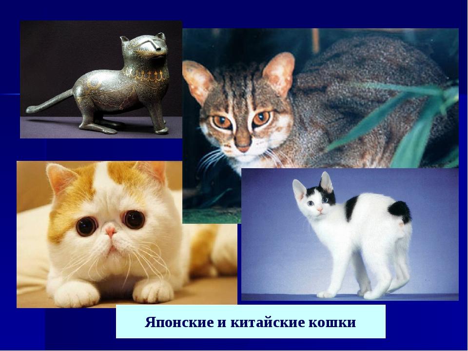 Японские и китайские кошки