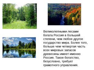 Великолепными лесами богата Россия в большей степени, чем любое другое госуда