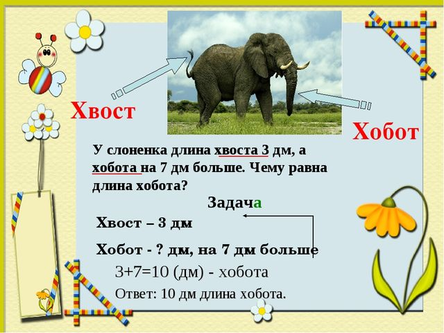 Хвост Хобот  Хвост – 3 дм Хобот - ? дм, на 7 дм больше У слоненка длина хво...