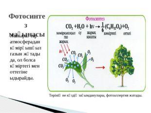 Фотосинтез мағынасы Жапырақтар атмосферадан көмірқышқыл газын жұтады да, ол б