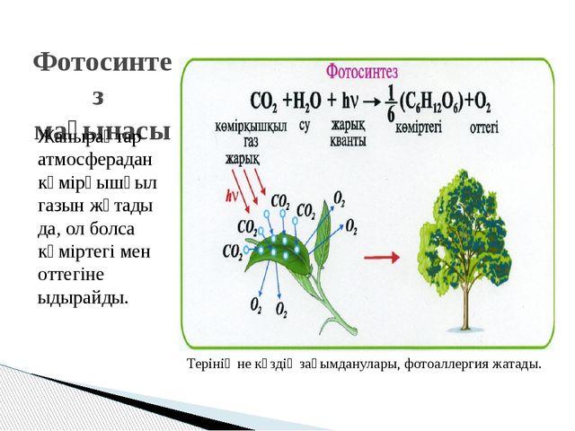 Фотосинтез мағынасы Жапырақтар атмосферадан көмірқышқыл газын жұтады да, ол б...