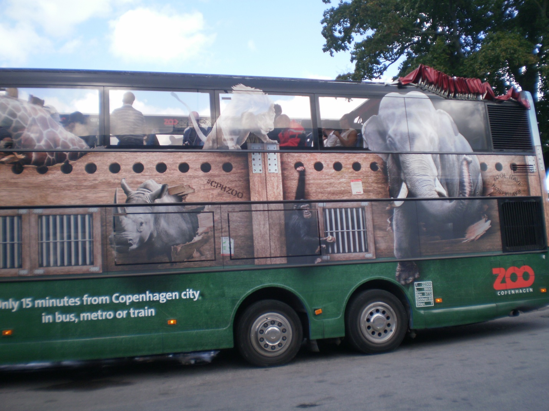 бывают виды смешные автобусы фото хризантема
