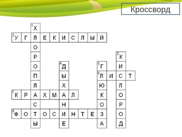 photosynthesis crossword