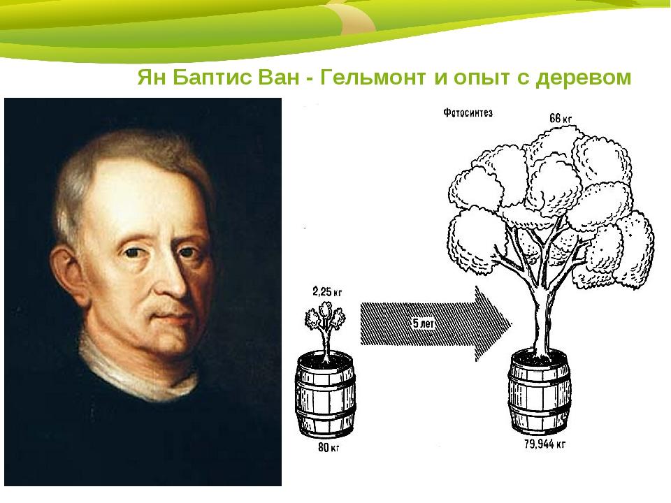 Ян Баптис Ван - Гельмонт и опыт с деревом