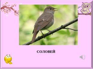 Какая птица лучше всех поёт? СОЛОВЕЙ