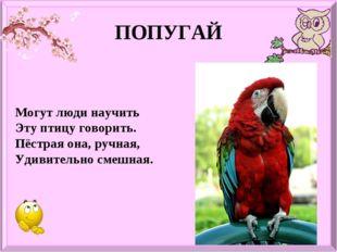 ПОПУГАЙ Могут люди научить Эту птицу говорить. Пёстрая она, ручная, Удивитель