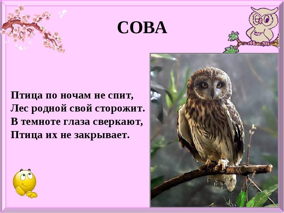 СОВА Птица по ночам не спит, Лес родной свой сторожит. В темноте глаза сверка...