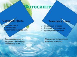Фотосинтез Световая фаза Темновая фаза Только на свету В тилакоидах хлороплас