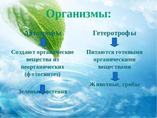Организмы: Автотрофы Создают органические вещества из неорганических (фотосин