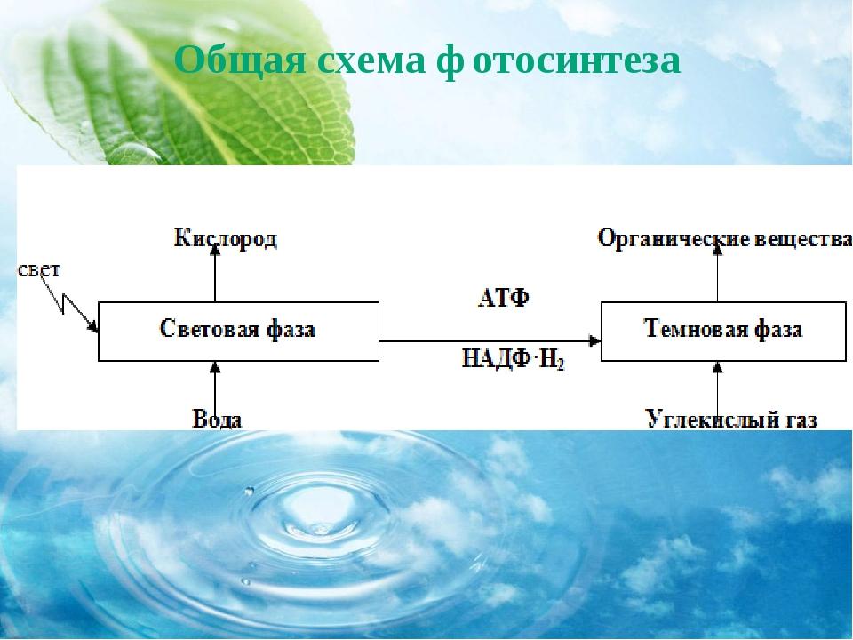 Общая схема фотосинтеза