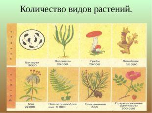 Количество видов растений.