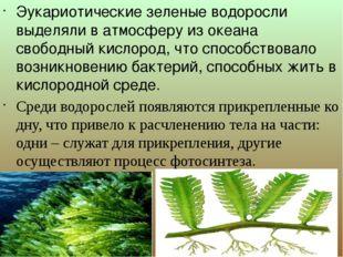 Эукариотические зеленые водоросли выделяли в атмосферу из океана свободный к