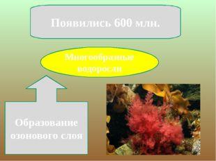 Многообразные водоросли Появились 600 млн. Образование озонового слоя