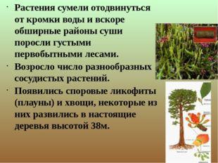 Растения сумели отодвинуться от кромки воды и вскоре обширные районы суши по