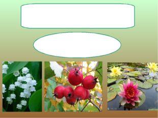 Цветковые растения Появились 100 млн.