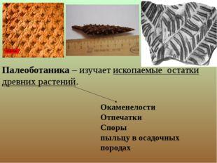 Палеоботаника – изучает ископаемые остатки древних растений. Окаменелости От