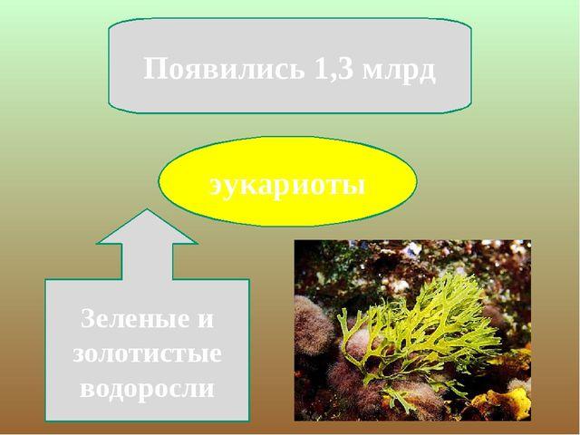 эукариоты Появились 1,3 млрд Зеленые и золотистые водоросли