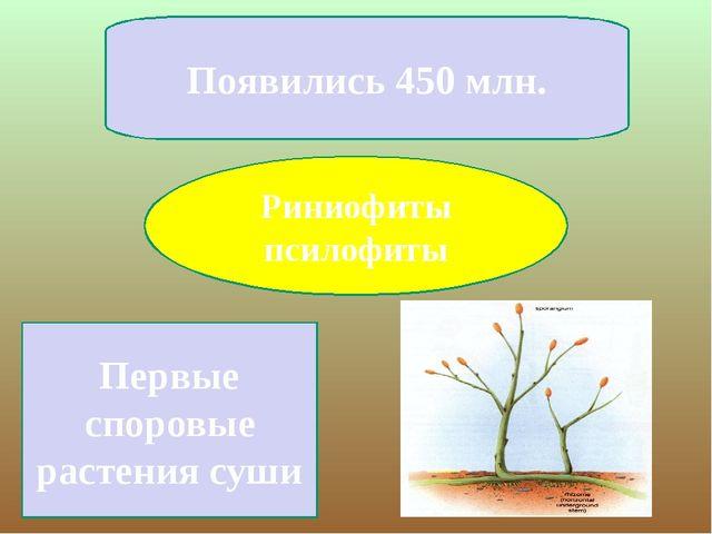 Риниофиты псилофиты Появились 450 млн. Первые споровые растения суши