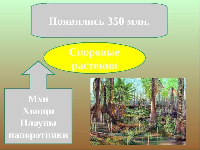 Споровые растения Появились 350 млн. Мхи Хвощи Плауны папоротники