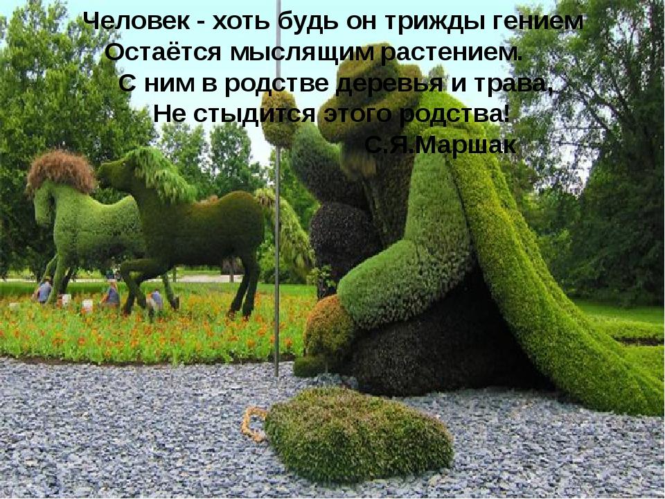 Человек - хоть будь он трижды гением Остаётся мыслящим растением. С ним в род...