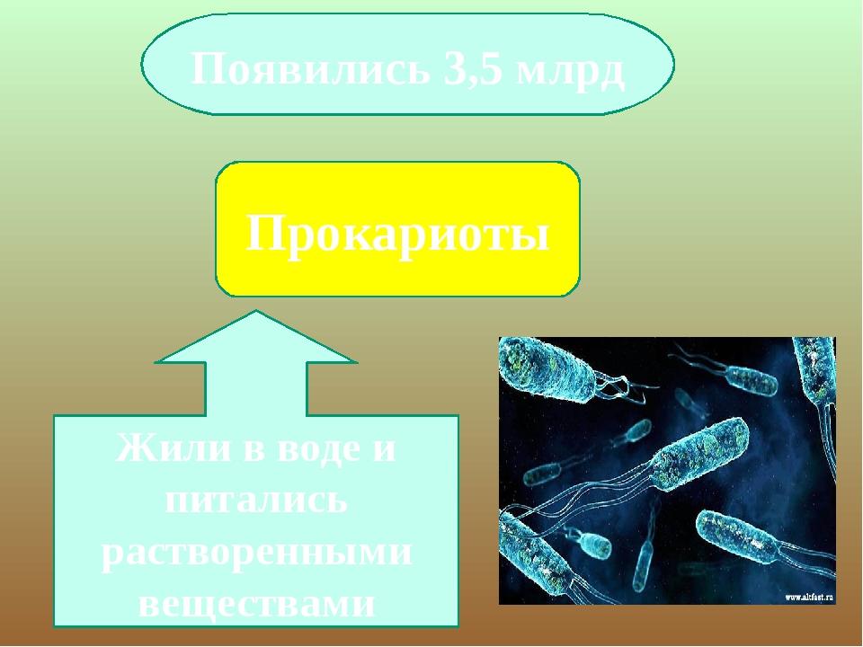 Прокариоты Появились 3,5 млрд Жили в воде и питались растворенными веществами