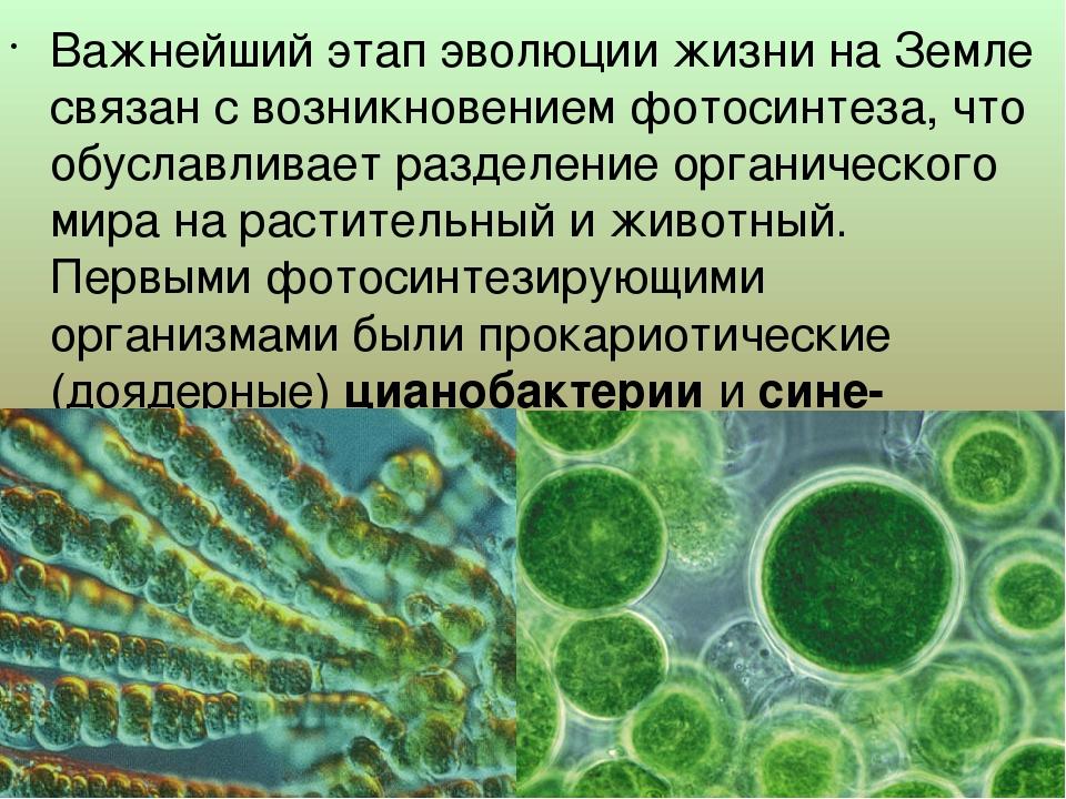 Важнейший этап эволюции жизни на Земле связан с возникновением фотосинтеза,...