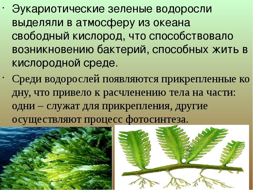 Эукариотические зеленые водоросли выделяли в атмосферу из океана свободный к...