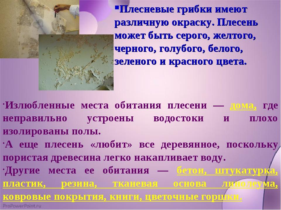 Плесневые грибки имеют различную окраску. Плесень может быть серого, желтого,...