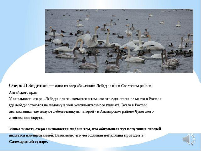 Озеро Лебединое— одно из озер «Заказника Лебединый» в Советском районе Алтай...
