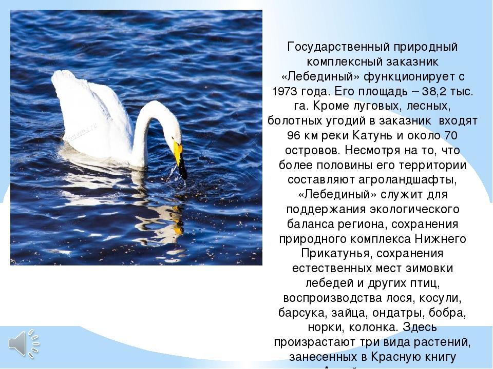 Государственный природный комплексный заказник «Лебединый» функционирует с 19...