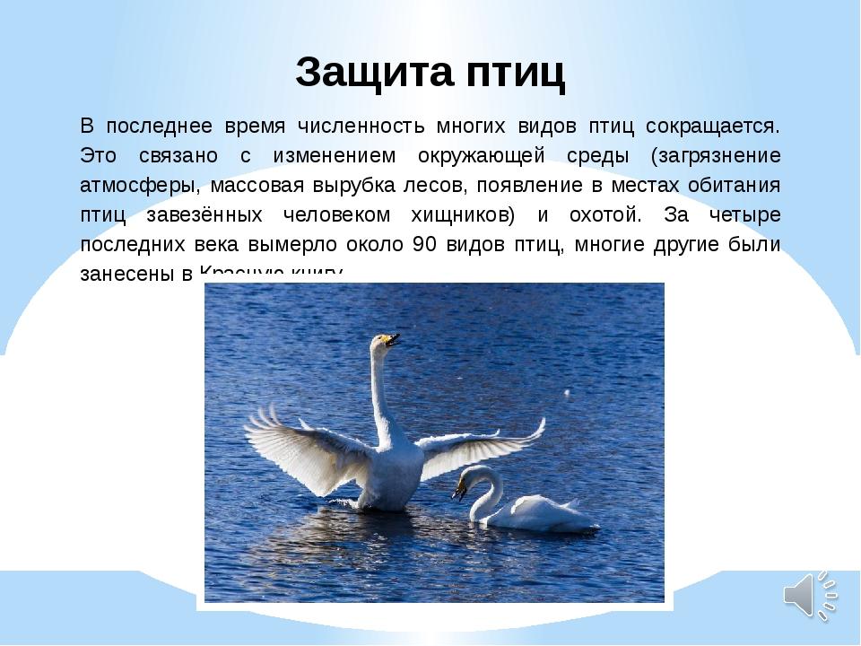 Защита птиц В последнее время численность многих видов птиц сокращается. Это...