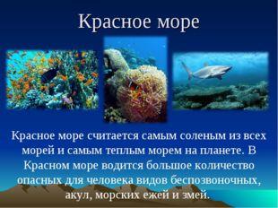 Красное море Красное море считается самым соленым из всех морей и самым теплы