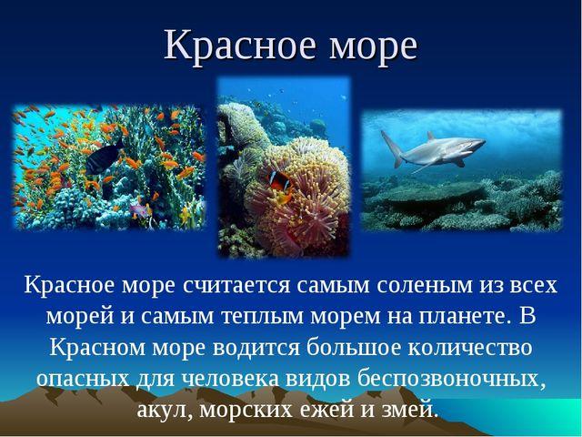 Красное море Красное море считается самым соленым из всех морей и самым теплы...
