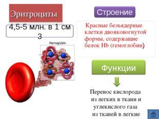 Эритроциты Красные безъядерные клетки двояковогнутой формы, содержащие белок