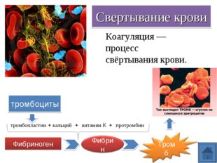 Свертывание крови тромбоциты тромбопластин кальций витамин К протромбин + + +