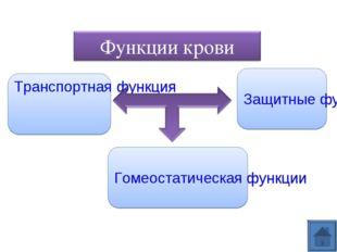 Транспортная функция Защитные функции Гомеостатическая функции